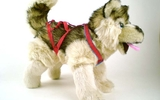 00151 Husky And Harness, Standing, 13 Inch